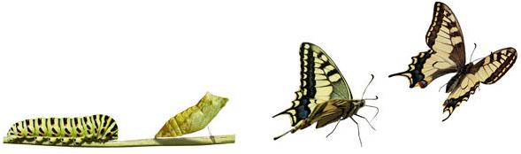 papillon qui sort de sa chrysalide, icone développement personnel et schémas de comportement inconscient, découvrir qui je suis