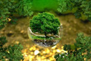 Terre, arbre, démarche écologique, environnement